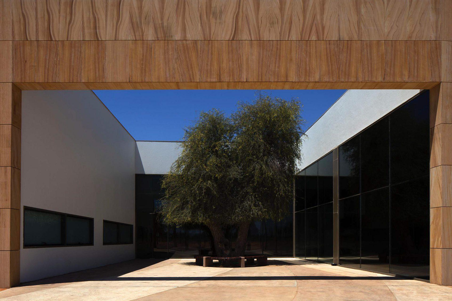 Mleiha Archaeological Centre. Der Ghaf-Baum im Innenhof stand hier schon vor Errichtung des Gebäudes.