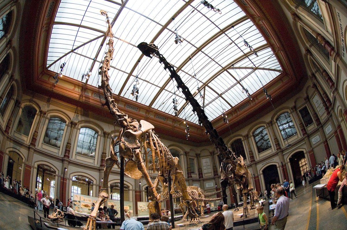 Dinoraum.  Der Sauriersaal im Museum für Naturkunde