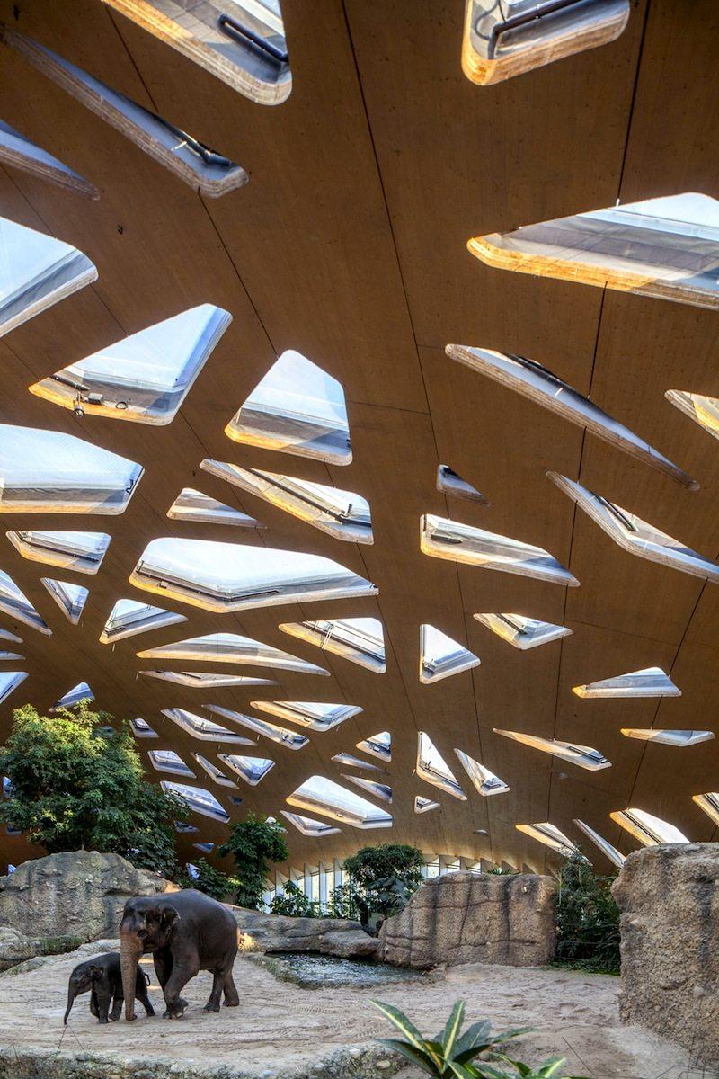 Elefantenhaus Zoo Zürich. Die 6800 Quadratmeter große Holzschale wölbt sich netzartig über dem Elefanteninnengehege. Die freitragende Schale hat 271 eingeschnittene Oberlichter. Von Markus Schietsch Architekten GmbH, Zürich. Fertigstellung 2004