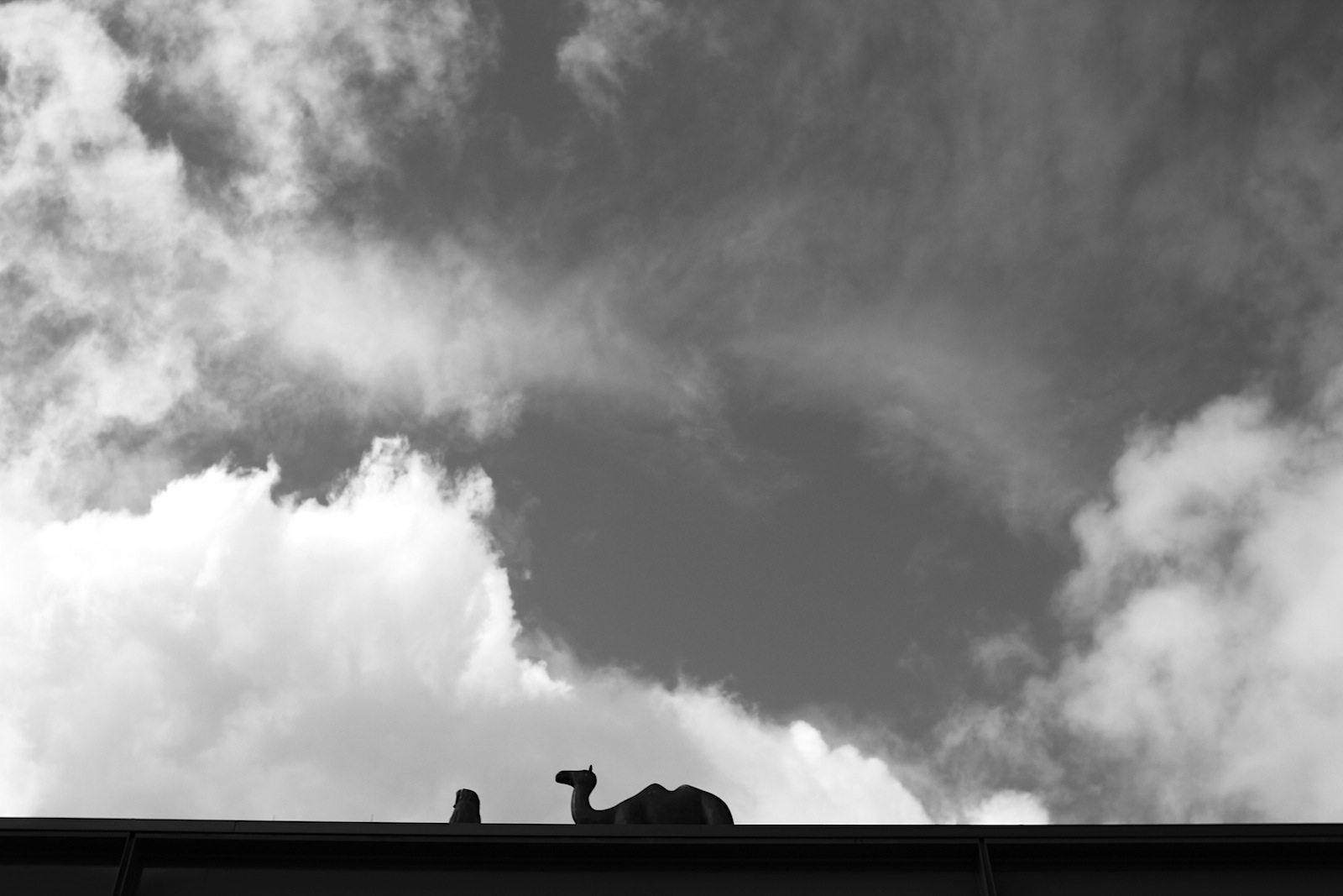 Kunsthal Rotterdam. Kameltreiber und sein Buckeltier: eine Installation des Bildhauers Henk Visch aus Eindhoven. Das Werk symbolisiert die wechselnden Wanderausstellungen der Kunsthal.
