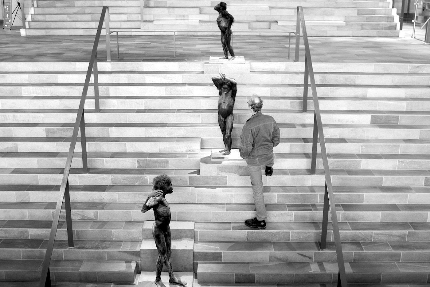 Moesgaard Museum. Der Weg in die Urgeschichte von Homo Sapiens und seinen Verwandten und damit in die ständige Ausstellung führt über die Evolutionstreppe, auf der täuschend echte Wachsfiguren-Homini stehen. Der etwas kahlköpfige, bekleidete Mensch ist ein Besucher.