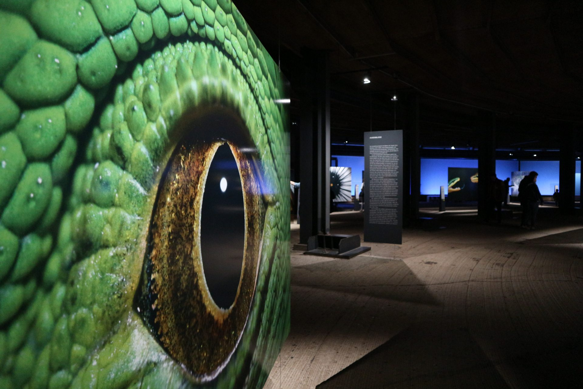 """Gasometer. Die Ausstellung """"Wunder der Natur"""" (März 2016–3. Dezember 2017)"""