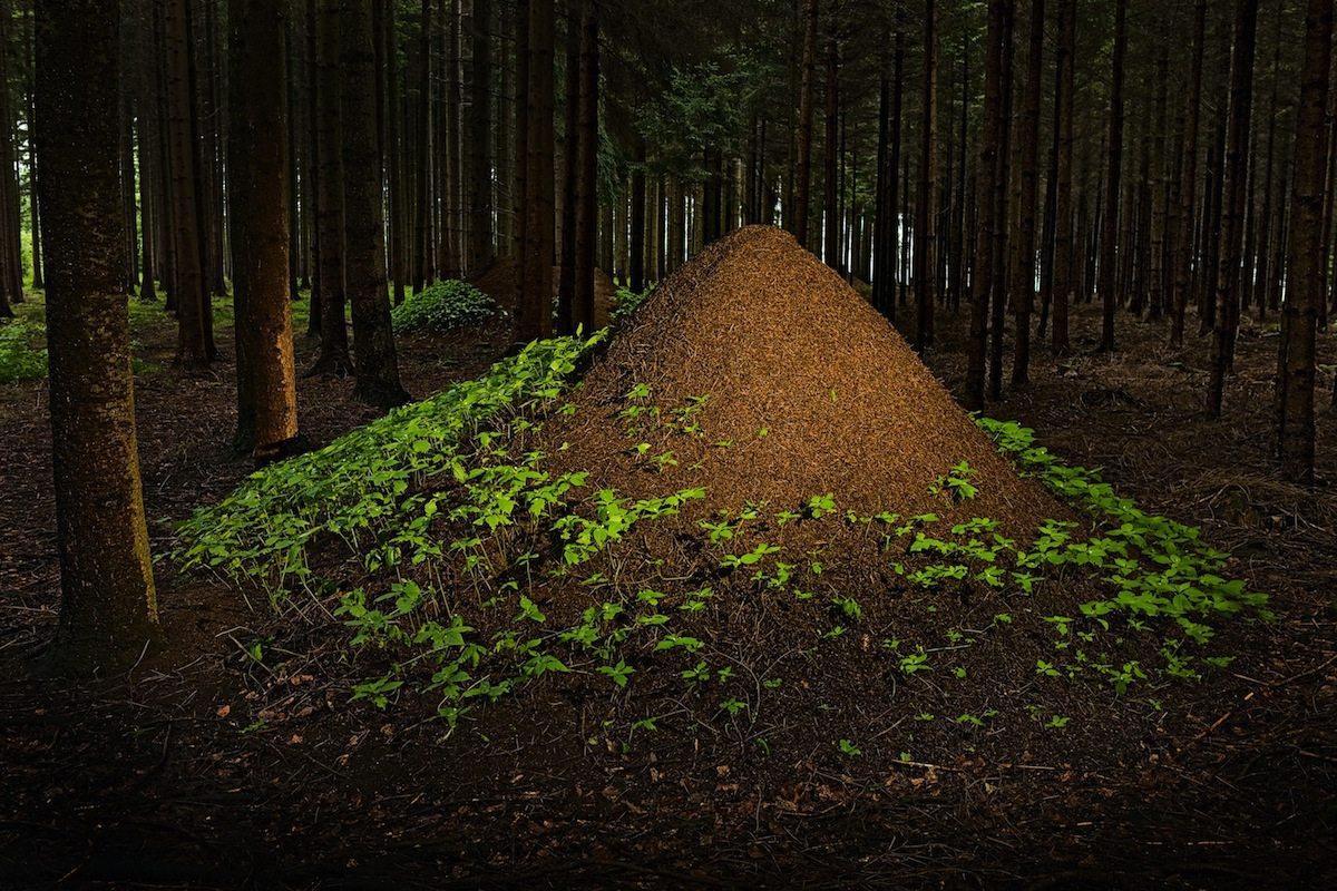 Der Bildband Architektier von Ingo Arndt