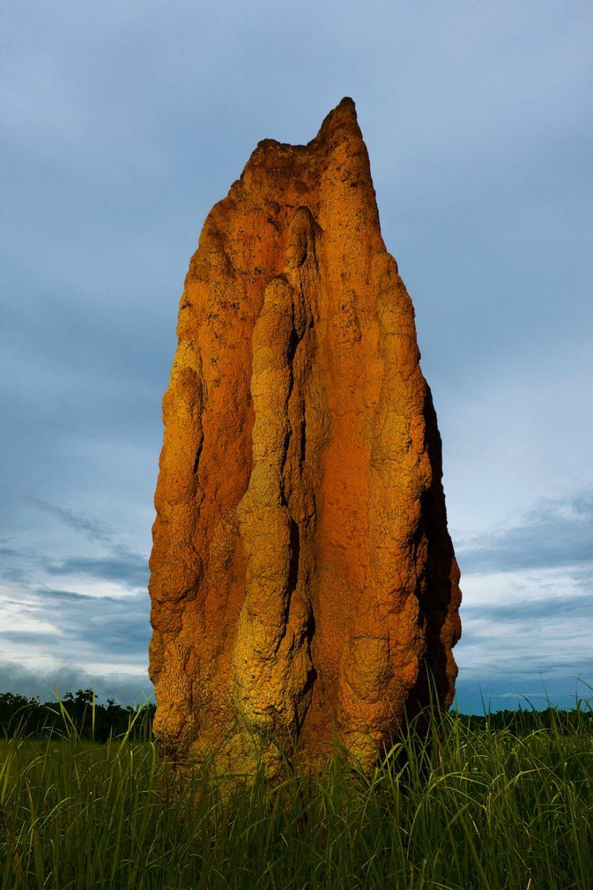 Hochhaus. Die Türme der in Australien lebenden Spinifex-Termiten gehören zu den spektakulärsten Tierbauwerken überhaupt und erreichen Höhen von über sechs Metern.