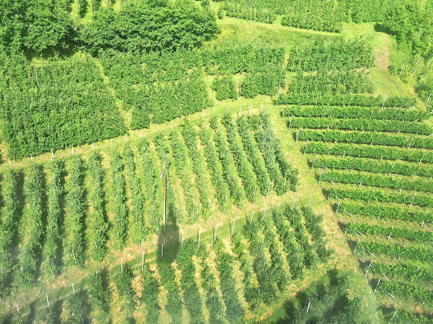 Abgehoben. Über Apfelplantagen, Weinberge und Esskastanien gleitet die Gondel ins Reich der Lärchenkiefer. Seit über hundert Jahren fährt die Seilbahn, eine der ältesten der Alpen, auf 1.500 Meter hinauf, die betuchten Gäste Merans wussten die Bergfrische schon früh zu schätzen.