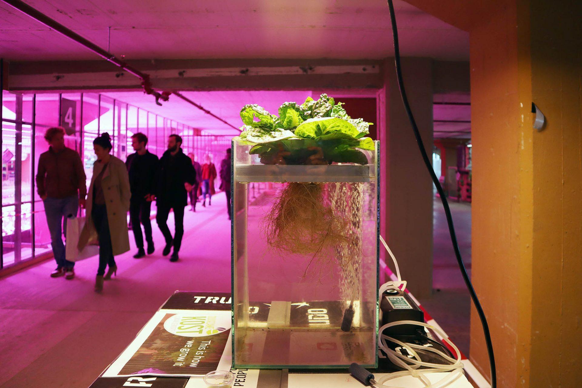 Strijp-S. Aber das neue Quartier weist mit innovativen Projekten in die Zukunft, wie das selbstversorgende Urban Farming-Projekt Duurzame Kost auf einer der ehemaligen Fabriketagen.