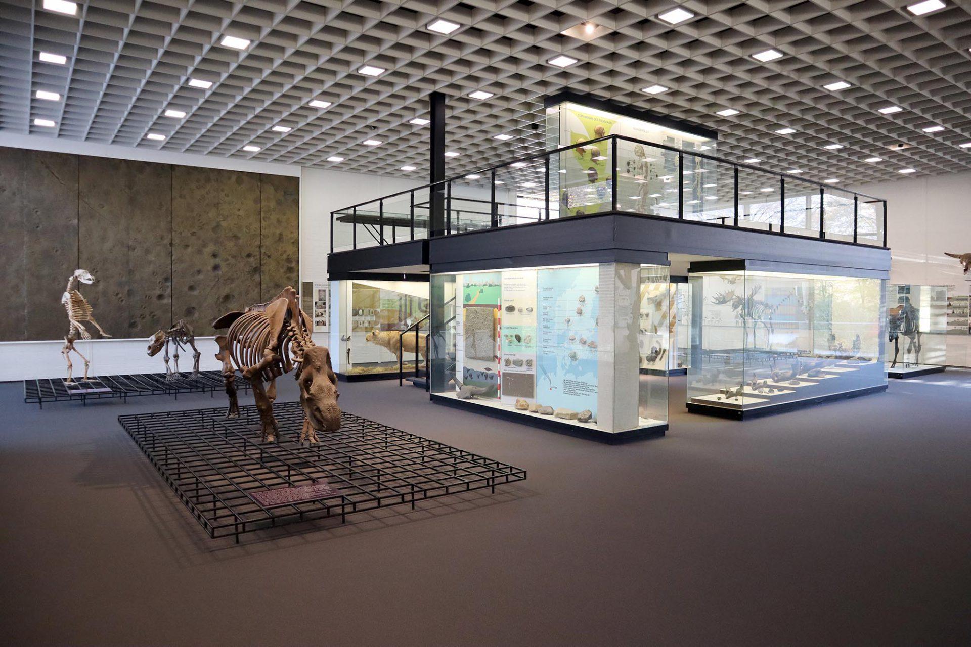 Josef Albers Museum Quadrat. Im Pavillon 1 ist die eiszeitliche Sammlung untergebracht.