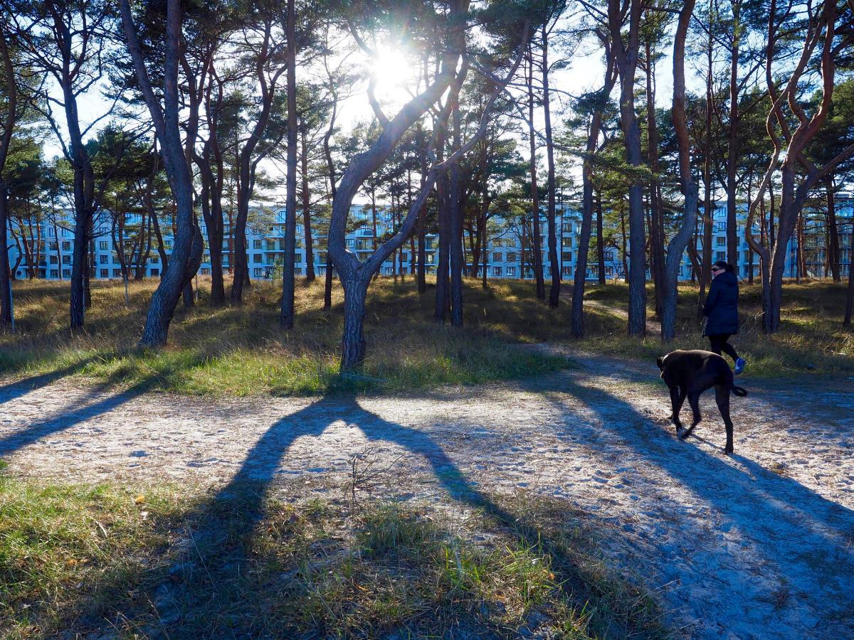 Weißes Band. Vom Strand aus filtert ein Streifen der ausgedehnten Kiefernwälder, in die Prora eingebettet ist, den Blick auf den mit rund drei Kilometern immer noch längsten Gebäudekomplex der Welt.