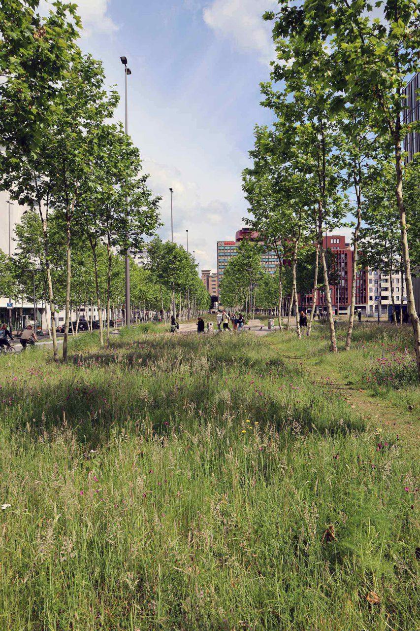 Strijp-S. Den Masterplan mit weitläufigen Grünzügen zwischen den revitalisierten Industriebauten und zeitgenössischer Architektur entwarf das niederländische Büro West 8. Saftie Grünzüge wechseln sich ab ...